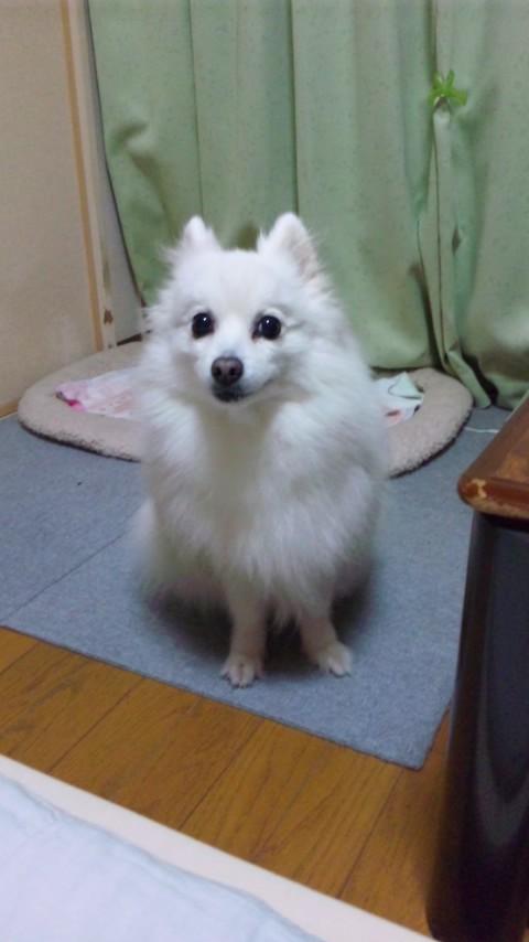 Luna_20110225_01