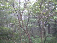 20060819_20_nasu_005