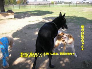 20061010run_006