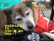 2007121kantouhonbu_s041_1